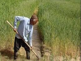 تأمین کشاورزان خرده پا