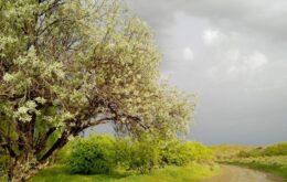 انشا درمورد یک روز بهاری