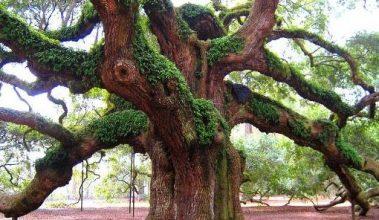 انشا درمورد درخت باویژگی های پا در هوا