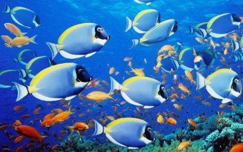 تحقیق گرمایش زمین و کاهش آن توسط ماهیها