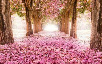 متن زیبا درمورد بهار