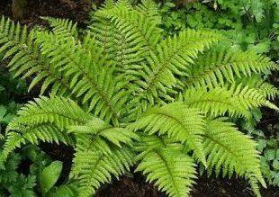 تحقیق درمورد هاگ گیاهان