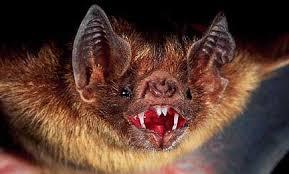 تحقیق درمورد خفاش و لانه آن