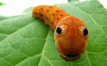 تحقیق فواید حشرات