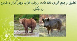 تحقیق فواید وجود گراز و خرس در جنگل