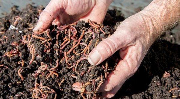 نقش کرم های خاکی در حاصلخیزی خاک