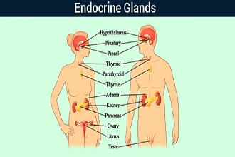محل دقیق هر یک از غدد دستگاه هورمونی