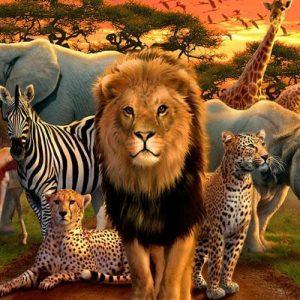 ویژگی های حیوانات شکارچی در زمان شکار