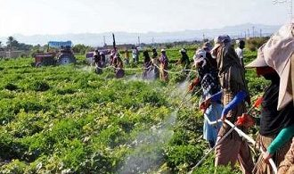 راهکار تولید محصول غذایی سالم در مزرعه