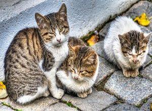 انشا دعوت نامه مهمانی برای گربه های شهر