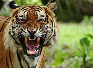 انشا حیوانات و گونه های در حال انقراض