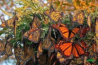 Photo of تحقیق درمورد زندگی پروانه ها