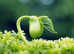 انشا درمورد رشد گیاه