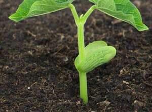 آماده سازی خاک برای گیاه
