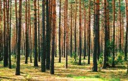 ارتباط بین کتاب و درخت در چیست؟