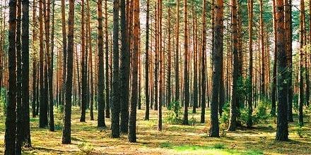 Photo of ارتباط بین کتاب و درخت در چیست؟