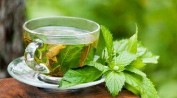 انشا با موضوع چای سبز