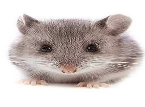 انشا درباره صحنه ورود یک موش به خانه