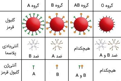 گروه خونی چیست؟   تحقیقستان