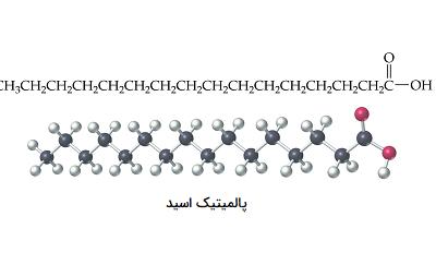 چربی چیست؟ | تحقیقستان
