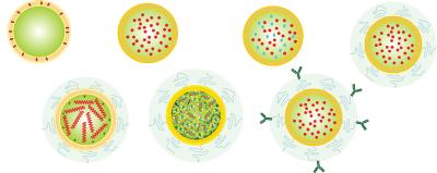 لیپوزوم چیست؟