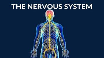 دستگاه عصبی چیست؟