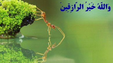 Photo of ضرب المثل روزی دست خداست