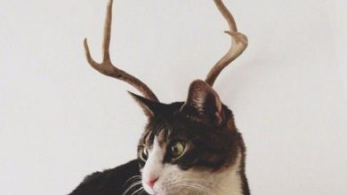 Photo of ضرب المثل آسه برو آسه بیا که گربه شاخت نزنه